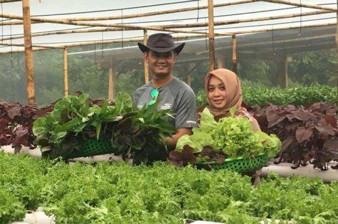 Letkol Pnb Anton dan istri panen sayur hidroponik (Intisari)